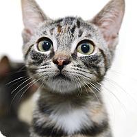 Adopt A Pet :: Paula - New York, NY
