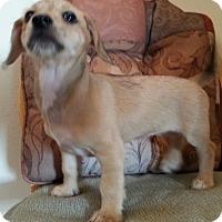 Adopt A Pet :: Minnie - Burbank, CA