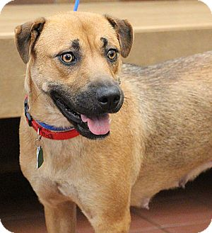 Shar Pei/Shepherd (Unknown Type) Mix Dog for adoption in Port Washington, New York - Gin