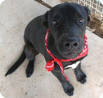 Labrador Retriever Mix Dog for adoption in Pilot Point, Texas - ETHAN
