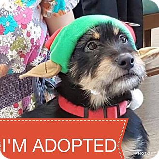 Irish Wolfhound Mix Puppy for adoption in Regina, Saskatchewan - Lilly