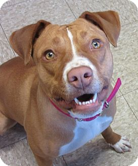 Pit Bull Terrier Mix Dog for adoption in Glenwood, Minnesota - Nola