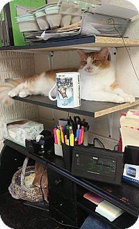 Domestic Longhair Cat for adoption in Ruckersville, Virginia - Slinky