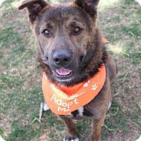 Adopt A Pet :: Bobby - Littleton, CO