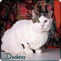 Adopt A Pet :: Duchess - Cincinnati, OH
