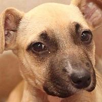 Adopt A Pet :: Ali - Rossville, TN