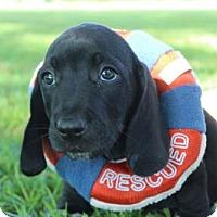 Adopt A Pet :: SPENCER - ADOPTION PENDING! - Pennsville, NJ
