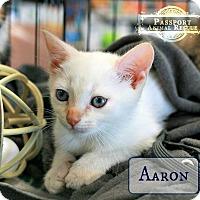 Adopt A Pet :: Aaron - Nottingham, MD