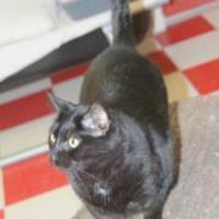 Adopt A Pet :: Brat - Thomasville, GA