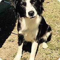 Adopt A Pet :: TREVOR - San Pedro, CA