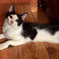 Adopt A Pet :: TIPSY - Modesto, CA
