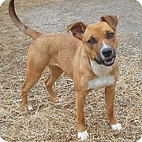 Adopt A Pet :: Shiloh - in Maine! - kennebunkport, ME