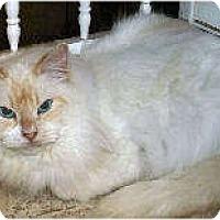 Adopt A Pet :: Hanna - Cleveland, OH