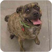 Adopt A Pet :: Barkley - Phoenix, AZ