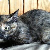 Adopt A Pet :: Shelly - Port Republic, MD