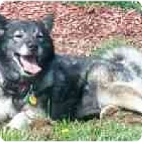 Adopt A Pet :: Dorothy - Belleville, MI