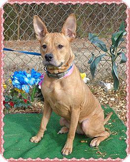 Shepherd (Unknown Type) Mix Dog for adoption in Marietta, Georgia - SHELBY (R)