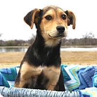Adopt A Pet :: *Devyn - PENDING - Westport, CT