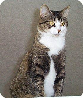 Domestic Mediumhair Cat for adoption in Fayetteville, Georgia - Jessica