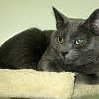 Adopt A Pet :: Katayna - Powell, OH