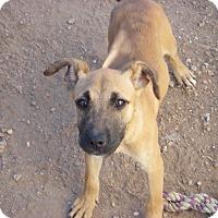 Adopt A Pet :: Sassy - Buchanan Dam, TX