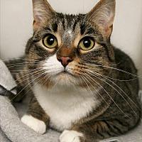 Adopt A Pet :: Belle - Adams, WI