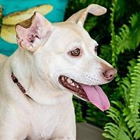 Adopt A Pet :: Margarita - Fort Lauderdale, FL