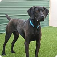 Adopt A Pet :: Houston - Meridian, ID