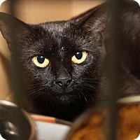 Adopt A Pet :: Colleen (Pregnant) - Marietta, OH