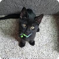 Adopt A Pet :: Gregg - New York, NY
