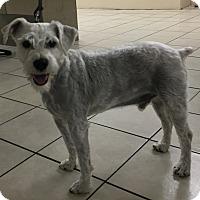 Adopt A Pet :: Bruce - Courtesy - Redondo Beach, CA
