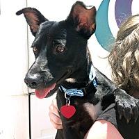 Adopt A Pet :: Bitty Boo - San Diego, CA