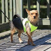 Adopt A Pet :: Feek/MS - Columbia, TN