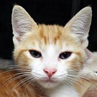 Adopt A Pet :: Sam - Grants Pass, OR