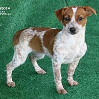 Adopt A Pet :: A095014 - Hanford, CA