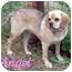 Photo 1 - Pug/Beagle Mix Dog for adoption in Watertown, South Dakota - Angel