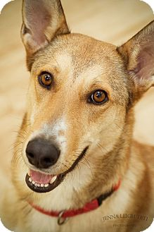 Shepherd (Unknown Type) Mix Dog for adoption in Jersey City, New Jersey - Cowboy Cody