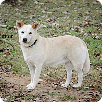 Shepherd (Unknown Type) Mix Dog for adoption in Bolivar, Tennessee - Winter