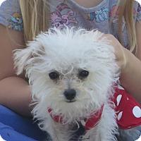 Adopt A Pet :: **COCONUT** - Stockton, CA