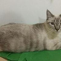 Adopt A Pet :: Purrrrsia - Los Angeles, CA