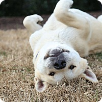 Adopt A Pet :: Akiko - Virginia Beach, VA