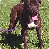 Adopt A Pet :: Kinya - Metamora, IN