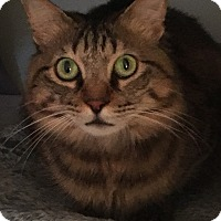 Adopt A Pet :: Pasha - Lambertville, NJ