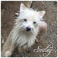 Adopt A Pet :: Smiley - Hope, BC