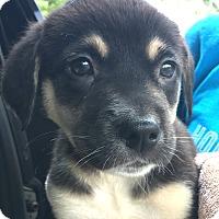 Adopt A Pet :: Chase CO - Schertz, TX