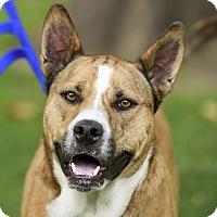 Adopt A Pet :: Uko - Kettering, OH