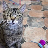 Adopt A Pet :: Gwinn - Republic, WA