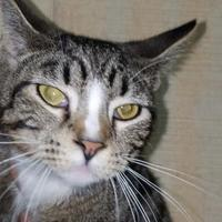Adopt A Pet :: Boots - Amory, MS