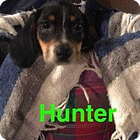 Adopt A Pet :: Hunter - Foristell, MO
