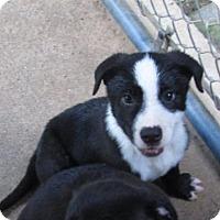 Adopt A Pet :: HANK - Williston Park, NY